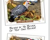 Woodpecker Bird Postcard,...