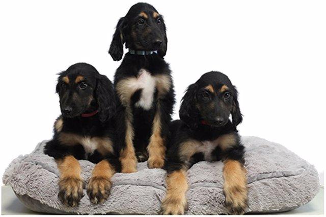fotonoticia 20171122164810 640 - El primer perro clonado reproducido en 3 clones...BeCurious!