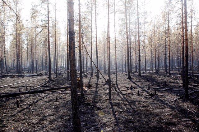 Incendios forestales en Suecia