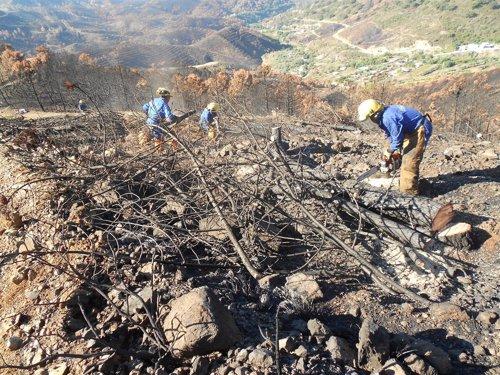 Trabajos en las zonas afectadas por el incendio de la Costa del Sol