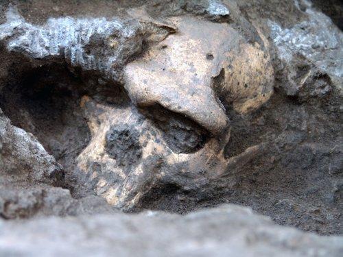 Cráneo de ancestro humano