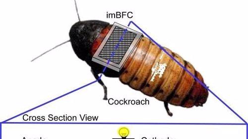 Cucaracha ciborg TechOn