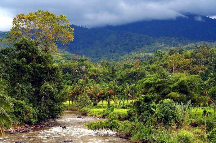 Bukit Barisan Selatan National Park - Sumatra - Indonesia