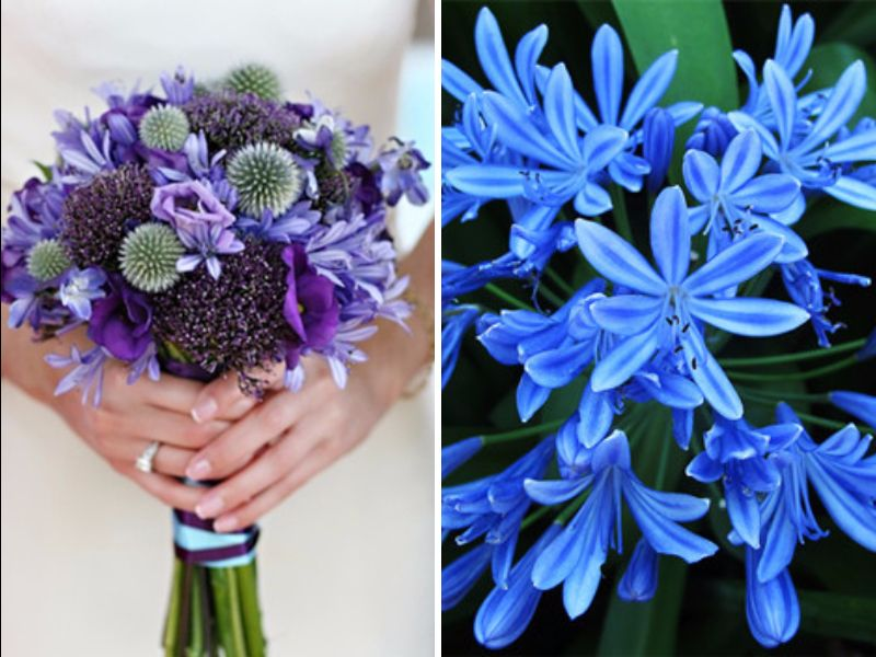 May Flowers: 20 Best Flowers In Season In May For Your