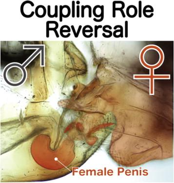 femeia are un penis masculin