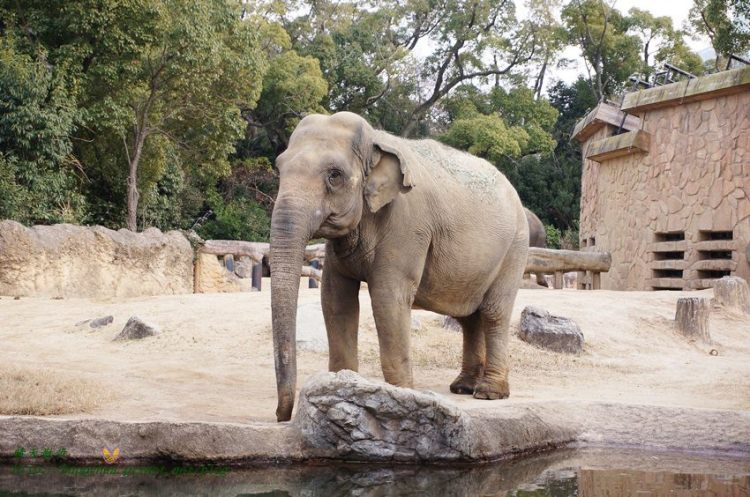 [日本]大阪∥天王寺動物園:善用大阪周遊卡的免費親子景點 百年歷史的老動物園 交通方便 近通天閣、新世界 來看可愛企鵝、北極熊 還有大型的鳥之樂園