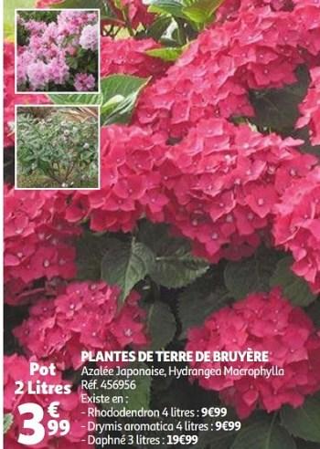 Produit Maison Auchan Ronq Plantes De Terre De Bruyere En Promotion Chez Auchan Ronq
