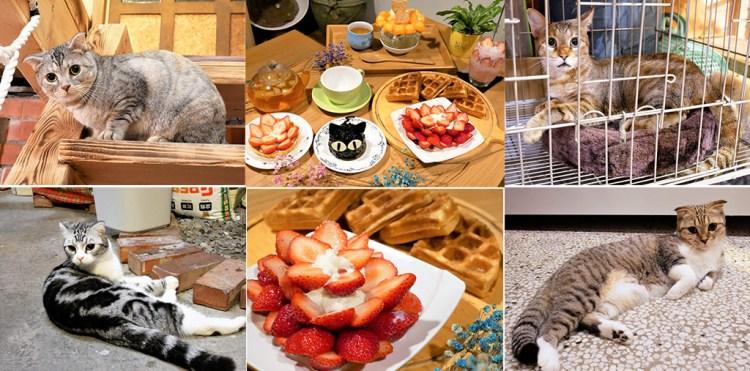 台南北區美食│巷弄裡的美味下午茶冰品點心,四隻喵星人陪妳一起渡過一個慵懶得午茶時光