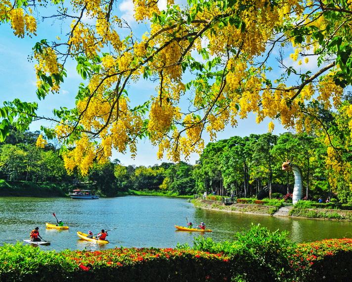 台南新化區旅遊景點》2020虎頭埤阿勃勒花季!歡迎大家週末假日一同來逛市集、遊湖、賞花、聽音樂~