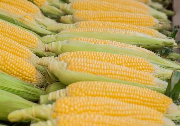 Bildergebnis für mais, Kostenlosen bilder