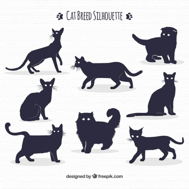 1 161 Cat Outline Images Free Download