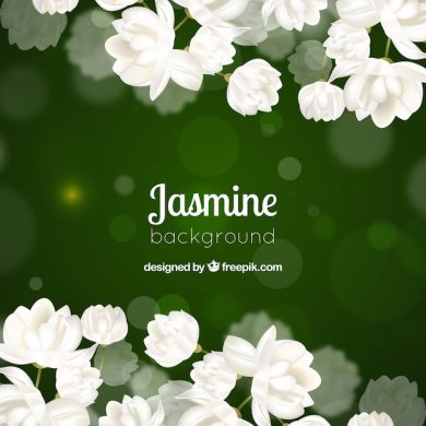 Jasmine Flowers Vectors  Photos and PSD files   Free Download Green bokeh background of white flowers