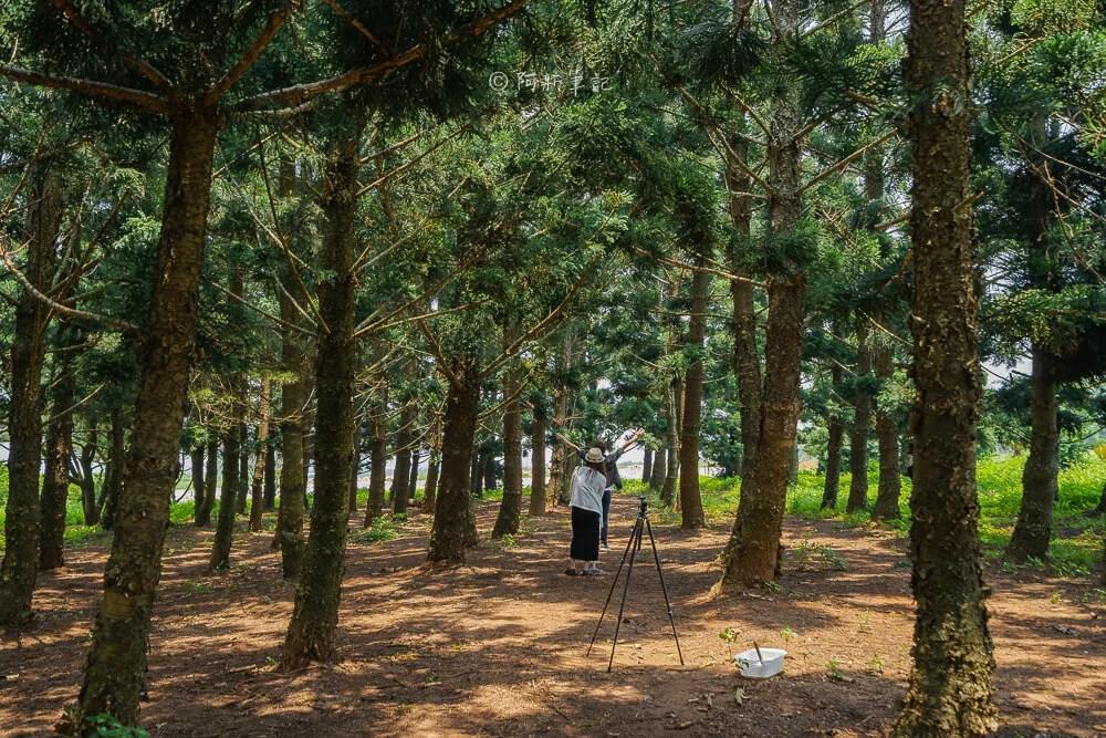 九天黑森林,九天森林,沙鹿黑森林,沙鹿森林,台中黑森林,台中沙鹿森林,沙鹿景點,台中景點,台中旅遊