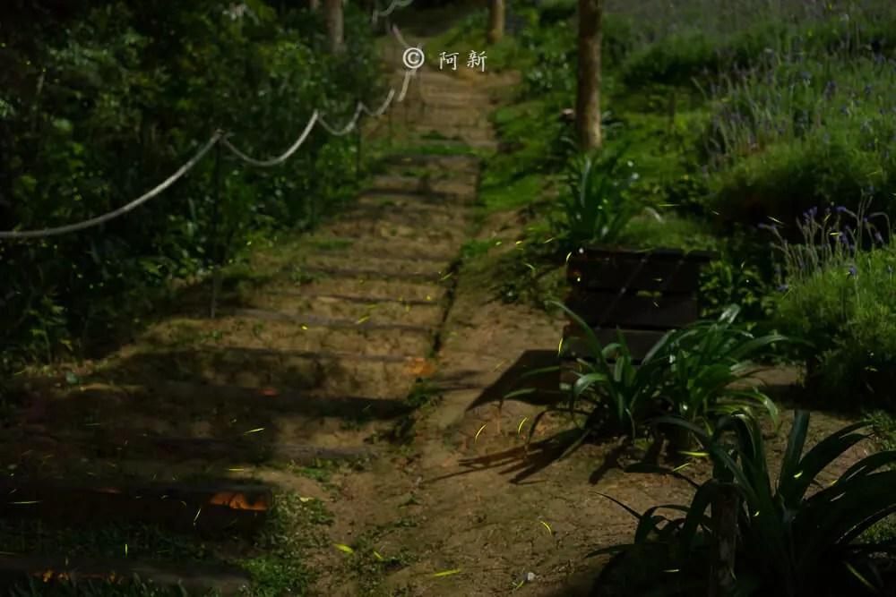 台中新社薰衣草森林-45