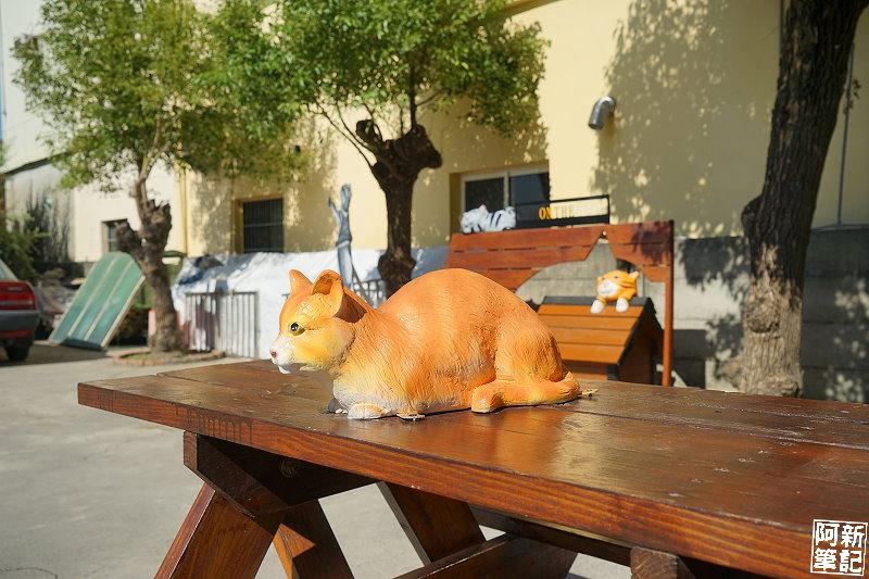 虎尾屋頂上的貓-20