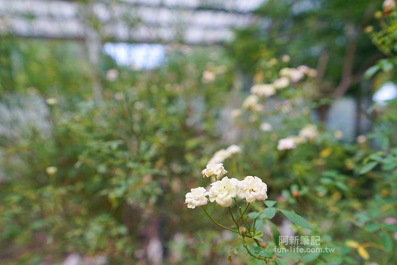蘿莎玫瑰莊園-43