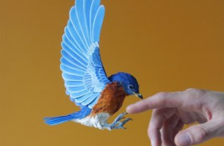 [極致工藝]美麗小鳥紙雕創作