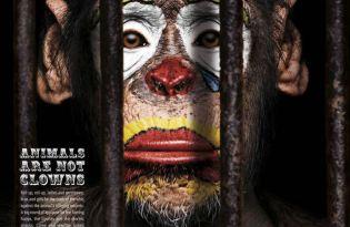 [海報設計]動物自由權生存宣傳海報