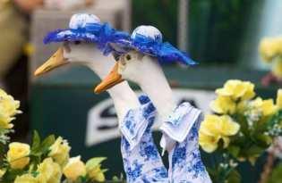 [攝影藝術]雪梨復活節時尚Party鴨鴨秀