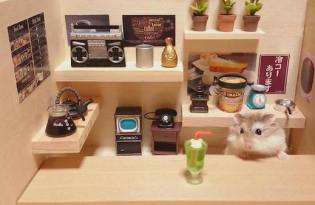 [攝影藝術]日本倉鼠 「銀次」的夢幻小食堂