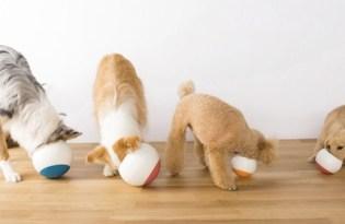 [寵物設計]狗狗緩慢覓食「Oppo Food Ball」碗設計