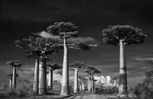 [攝影藝術]百年老樹尋根之旅