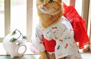 [寵物攝影]日本出品「喵星人和服浴衣攝影藝術」
