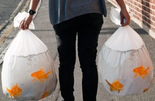 [包裝設計]擬真金魚垃圾袋