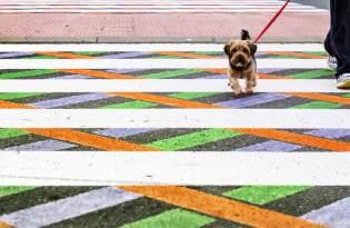 [插畫設計]西班牙街頭彩繪「另類斑馬線藝術」