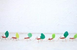 [工藝設計]日本玻璃昆蟲裝置藝術