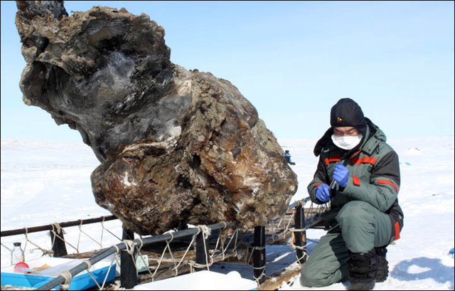 Russians Recover Fresh Flowing Mammoth Blood
