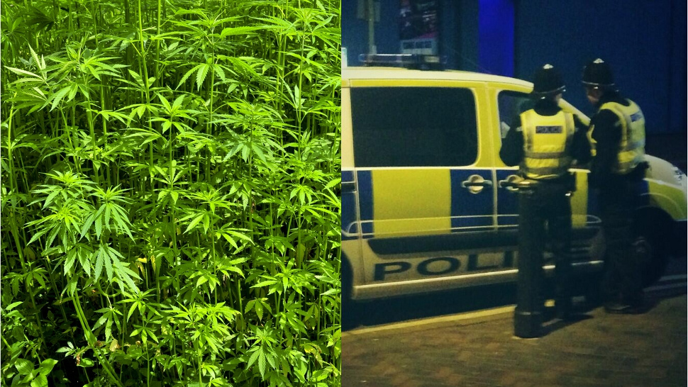 Flatulent Cop Leads Police to 'Cannabis Factory'