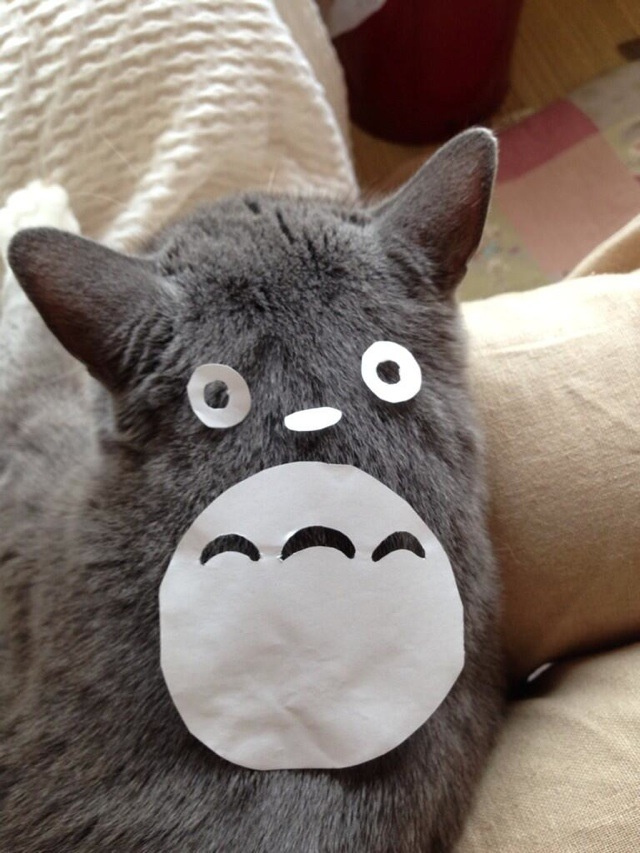 How To Turn Your Cat into Totoro