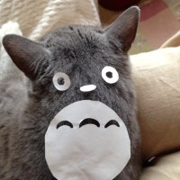 Things to do: How To Turn Your Cat into Totoro