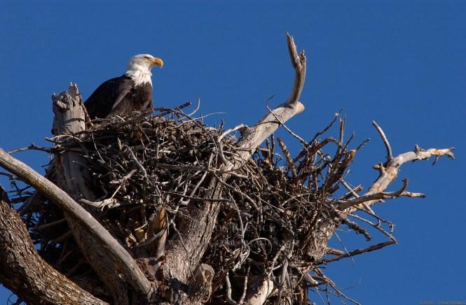 742157main Eagle Nest Before Storm Full Jpg