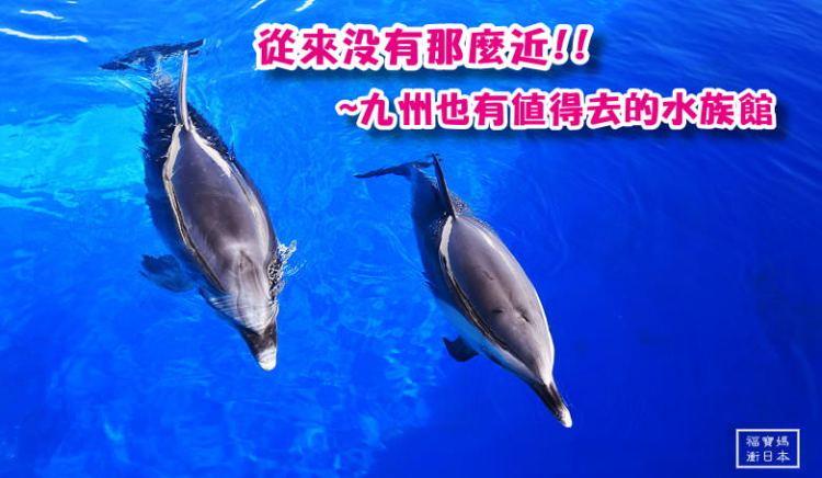 大分親子景點~大分海之卵水族館 高崎山自然公園,超值套票一起玩,免加購免預約就能與海豚做朋友