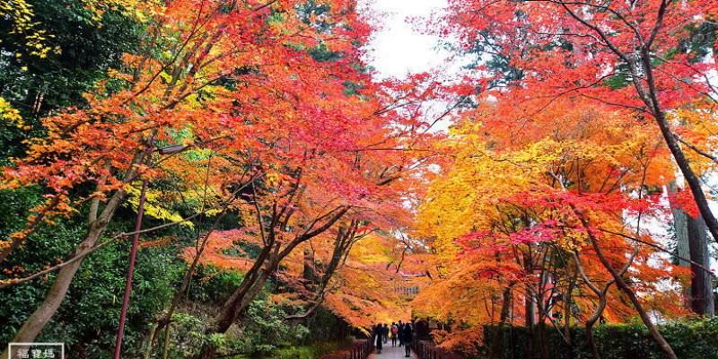 京都賞楓景點 總本山光明寺超夢幻楓葉隧道 紅葉地毯,不失望的紅葉景點