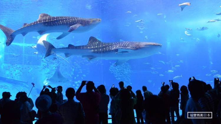 [沖繩必玩景點] 沖繩美ら海水族館~分享輕鬆觀賞精彩餵食秀小撇步!