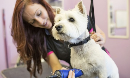 Dog or Cat Grooming Package at Afro Pets (Up to 53% Off)