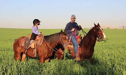 חוות צהלה בעמק איילון: ללמוד רכיבה על סוסים החל מ 68 ₪ בלבד לשיעור!