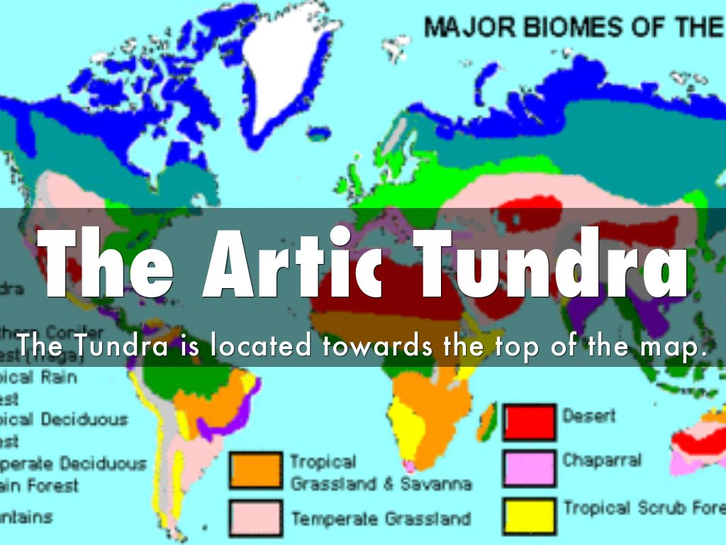 The Artic Tundra By Philipk