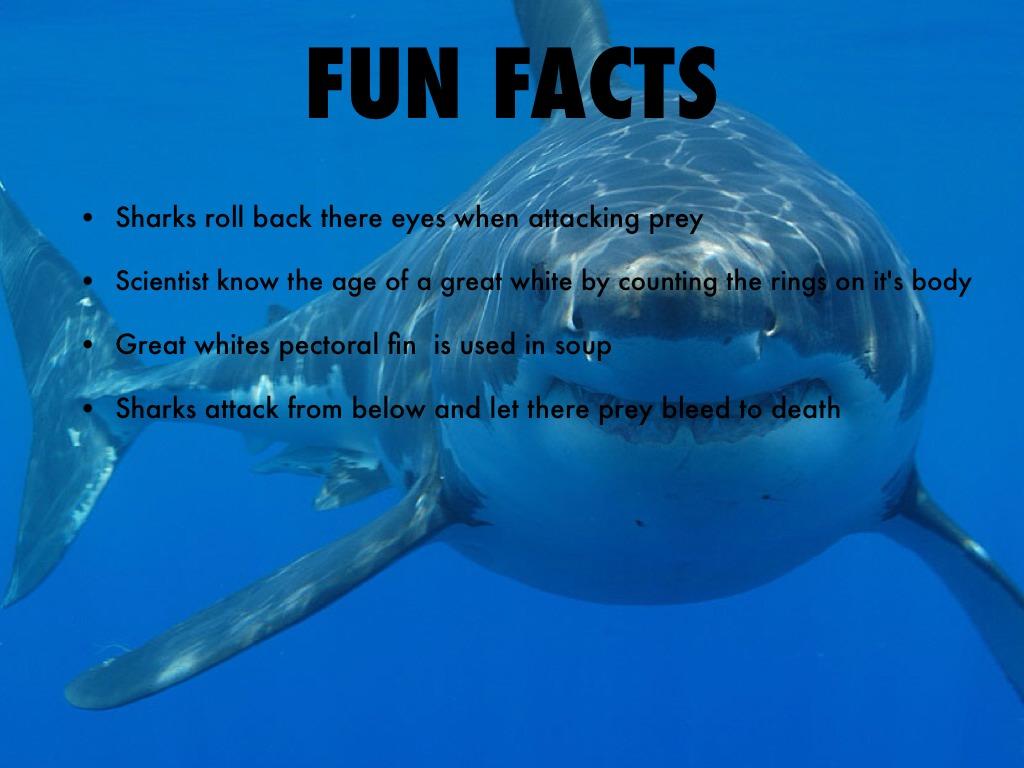 Great White Shark By Julie Slavik