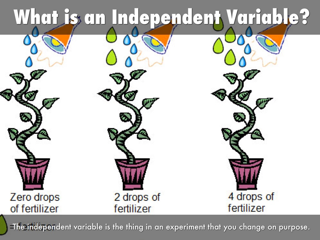 Independent Versus Dependent Variables By Carley