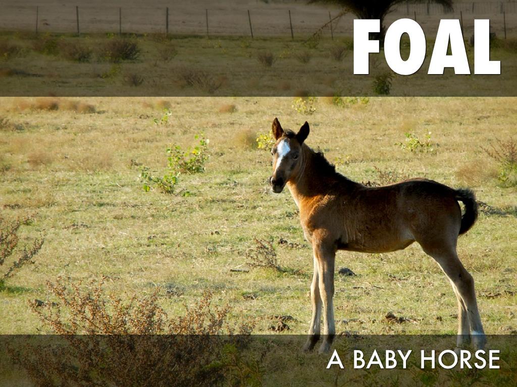Horse Life Cycle By Cori Urey