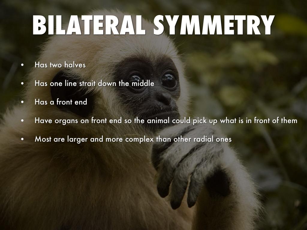 Animal Symmetry By Isaac Bensen