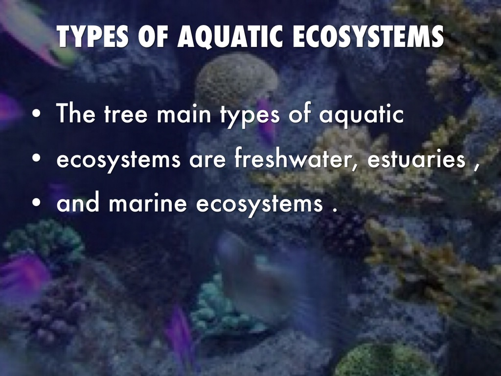 Aquatic Ecosystems By Regina Villanueva