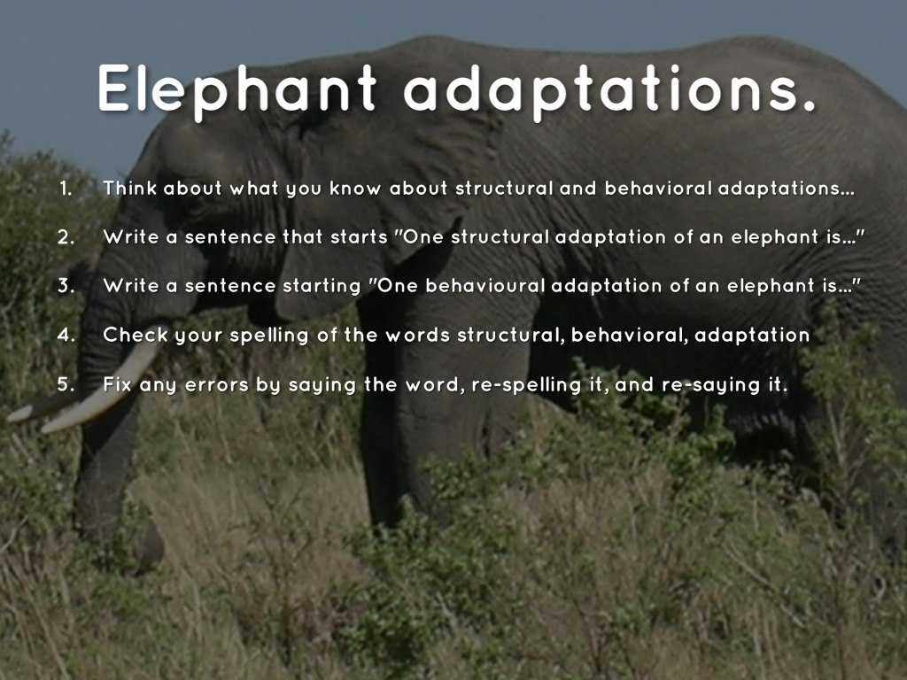 Adaptations Slides For Spelling 3 By Christopher Hunt