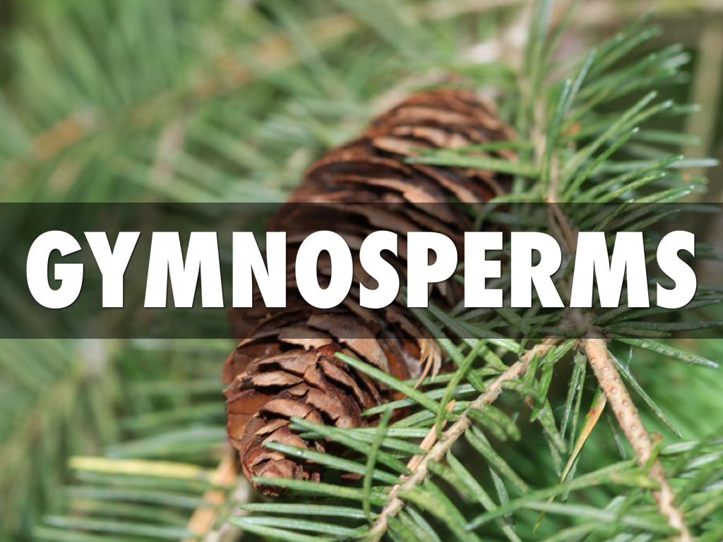 Angiosperms And Gymnosperms By Dawson Mcdaniel
