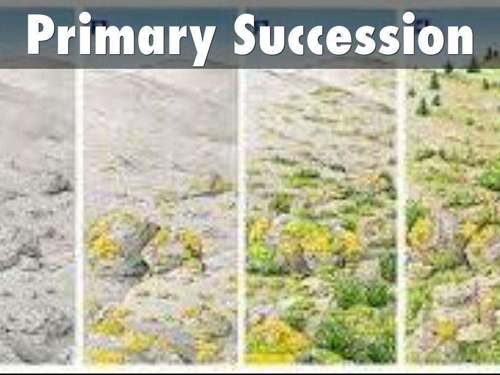 Ecological Succession By Allison Spillman
