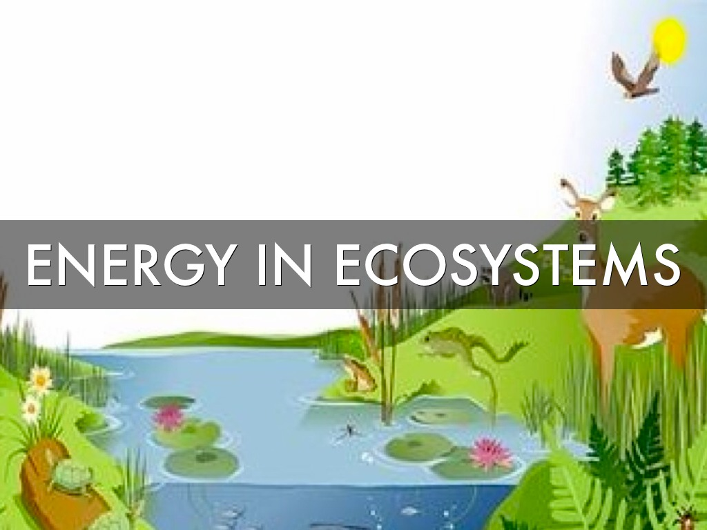 Carson Kelsey Energy In Ecosystems